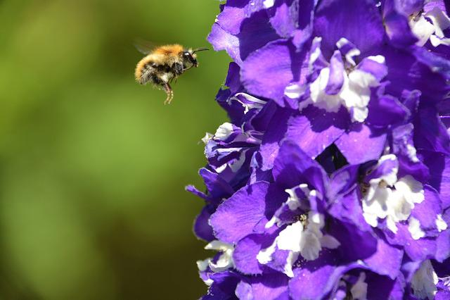 Bee, Bumble Bee, Flying, Insect, Nature, Fly, Yellow