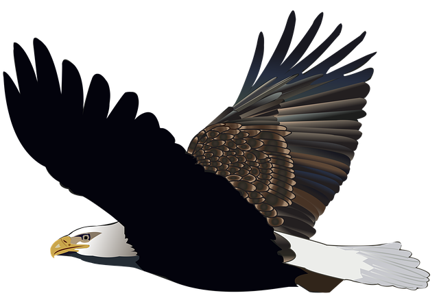 Bird, Eagle, Flying, Feather, Nature, American, Flight