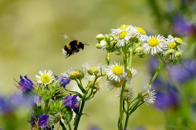 Spring, Flowering Plants, Insect, Hummel, Flying Insect
