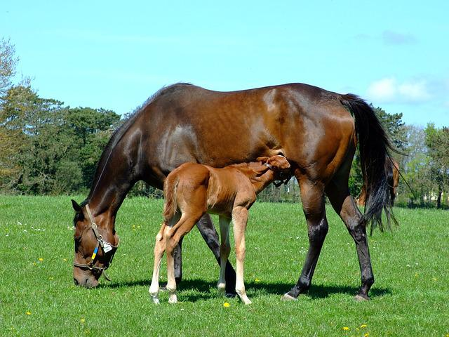 Mare, Foal, Horse