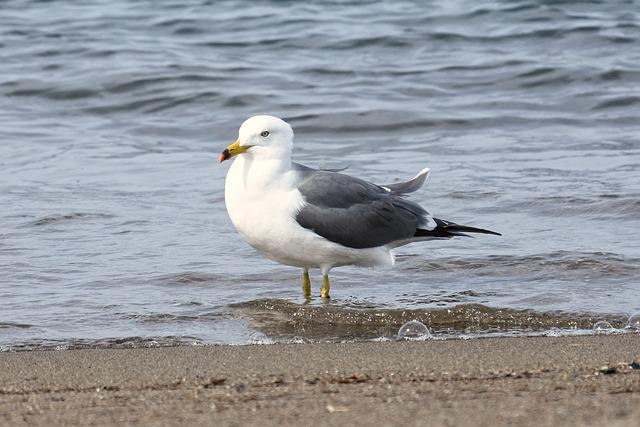 Animal, Sea, Beach, Foam, Sea Gull, Seagull, Seabird