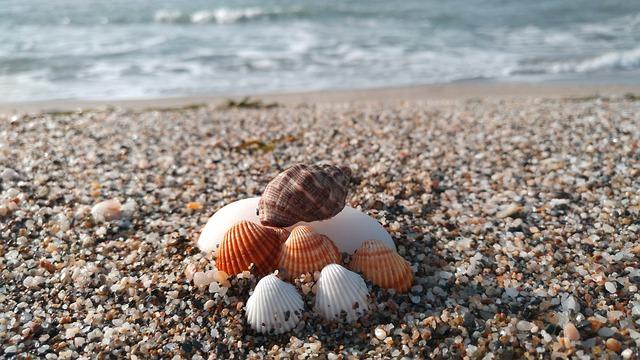 Beach, Shells, Sea, Stones, Sea Shells, Foam