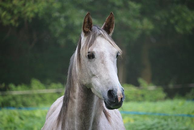 Horse, Mold, Thoroughbred Arabian, Autumn, Fog, Pasture