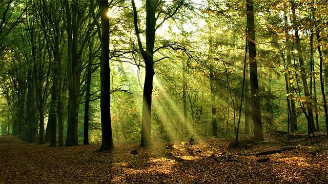 Forest, Sunrise, Landscape, Trees, Vote, Autumn, Fog