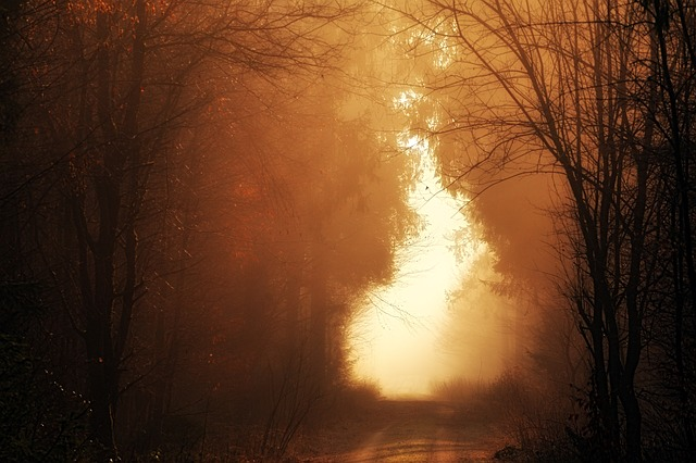 Panorama, Dawn, Sunset, Nature, Forest, Away, Fog, Road