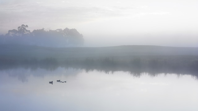 Duck, Pond, Serene, Fog, Mist, Early Morning, Lake
