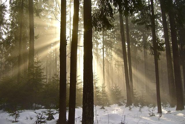 Forest, Fog, Nature, Trees, Mood, Winter, Sunlight