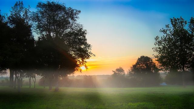 Morning, Dew, Fog, Nature, Dawn, Tree, Sun, Landscape