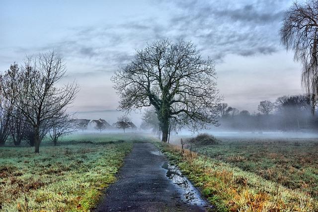 Nature, Tree, Landscape, Grass, Fog, Panorama, Rural