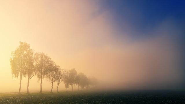 Dawn, Light, Sun, Trees, Fog, Landscape, Nature, Field