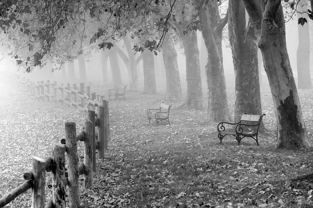 Autumn, Fog, Landscape, Dew, Nature, Mood, Meadow