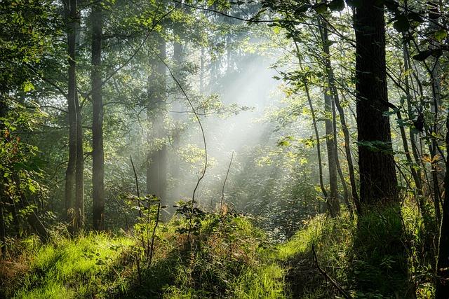 Fog, Sunbeam, Road, Trees, Mood, Landscape, Mystical