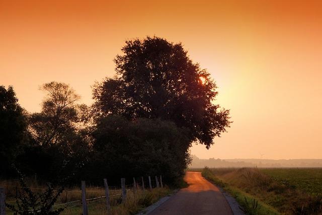 Sunrise, Haze, Fog, Trees, Morgenstimmung, Morning Hour