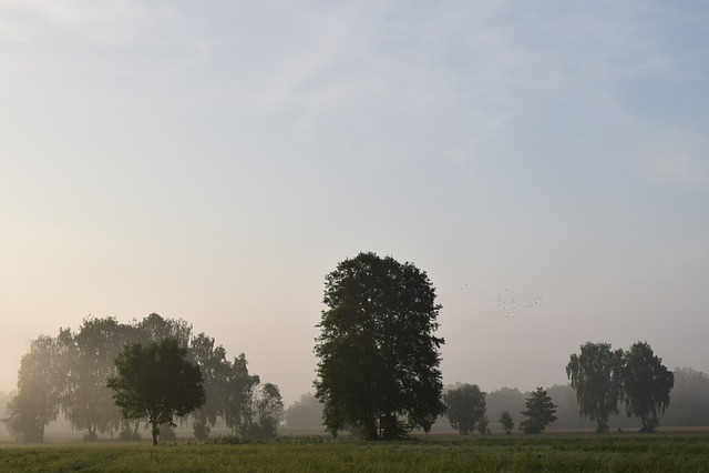 Morning Mist, Fog, Landscape, Nature, Sunrise