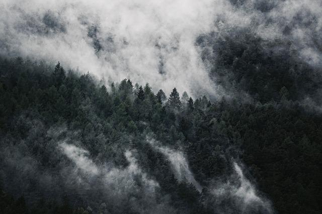 Forest, Fog, Nature, Trees, Autumn, Mood, Mountain