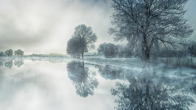 Nature, Tree, Fog, Waters, Snow, Lake, Water, Mirroring