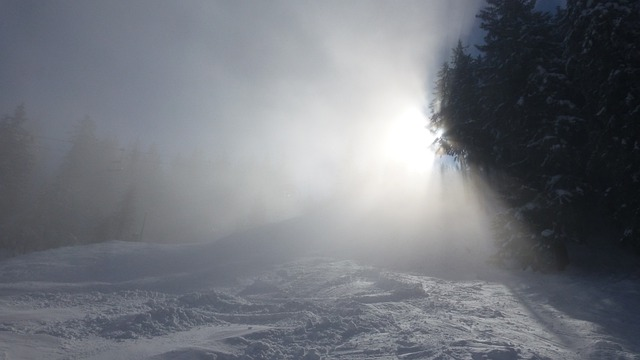 Allgäu, Alpine Pointed, Fog, Sun, Winter, Snow, Trees