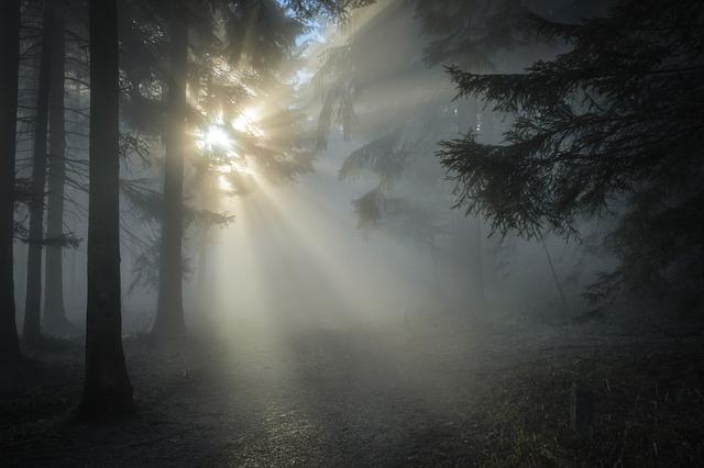 Sunbeams, Forest, Fog, Trees, Woods, Woodlands, Sunrays