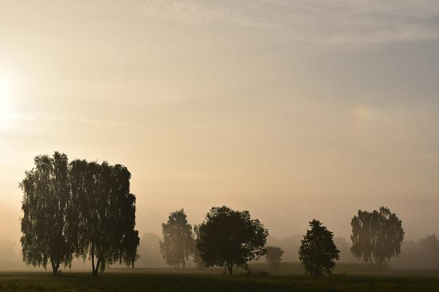 Morning Mist, Fog, Landscape, Nature, Sunrise