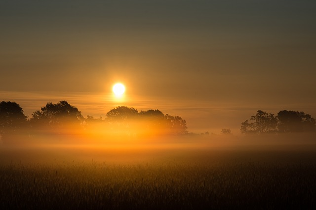 Sunrise, Fog, Field, Trees, Morning, Landscape