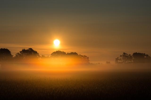 Sunrise, Fog, Field, Trees, Morning, Landscape