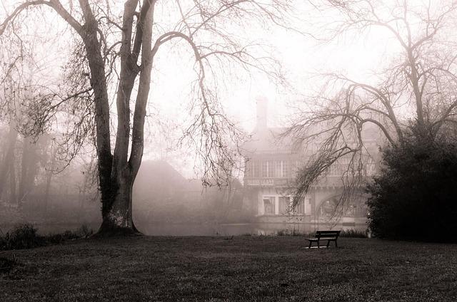 December, Fog, Nature, Winter Landscape, Tree, Mist