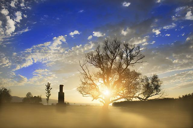 Landscape, Tree, Fog, Sunrise, Solar, Warm Colors