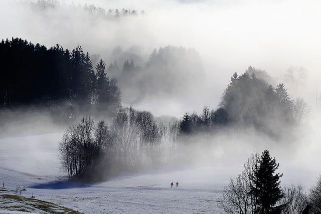 Free Photo Trees Trace Snow Winter Away Winter Mood