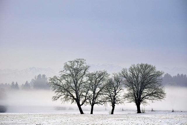 Nature, Tree, Winter, Fog, Landscape, Cold, Snow, Mood