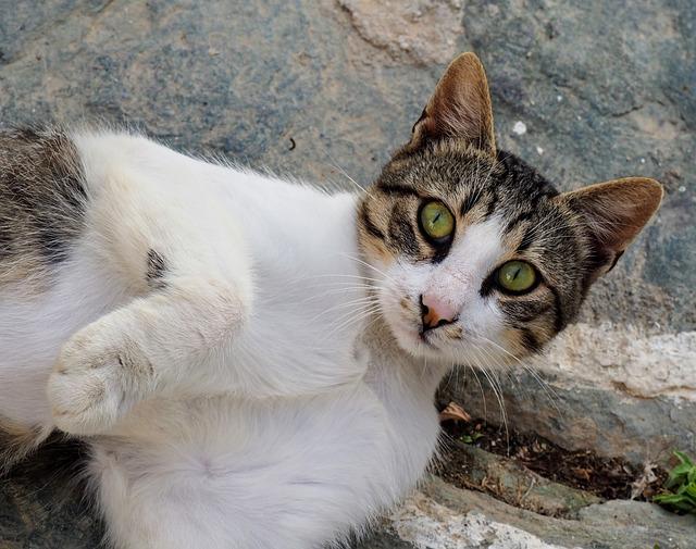 Folegandros, Greece, Cyclades, Cat, Tabby Cat, Look