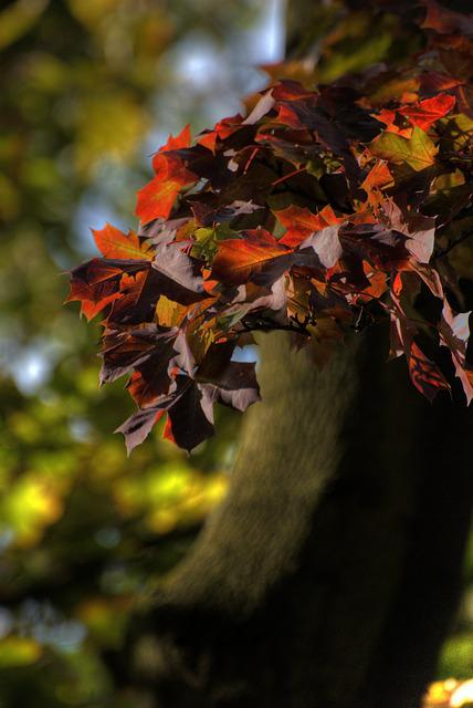 Autumn, Foliage, Colors, Nature, Colored, Tree, Green