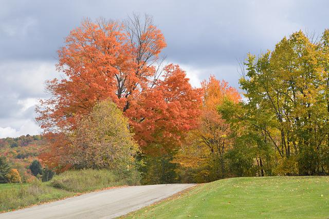 Fall, Foliage, Back Road, Autumn, Nature, Season, Maple