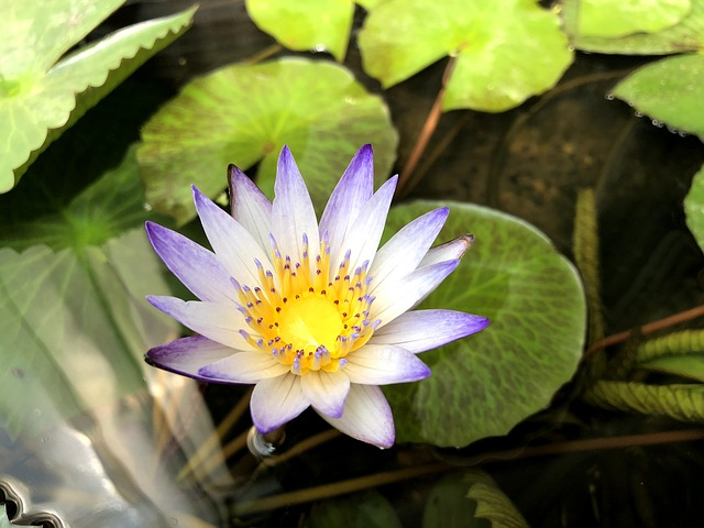 Plant, Nature, Foliage, Flower, Bloom