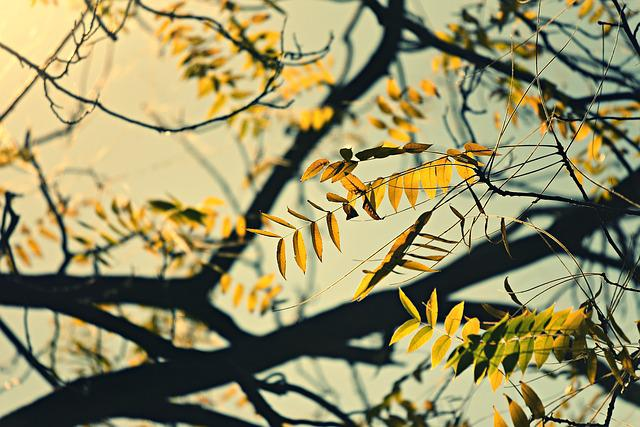 Branch, Walnut Tree, Leaves, Foliage, Autumn Colors