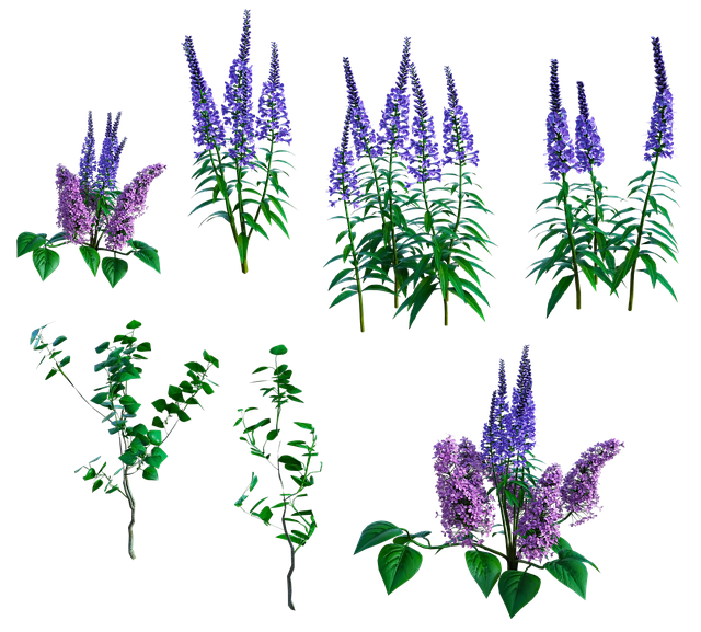 Lilac, Flower, Herbes, Herbal, Summer, Floral, Foliage