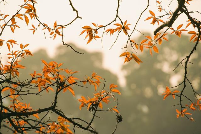 Forest, Foliage, Autumn, Hanoi, Vietnam, Nature