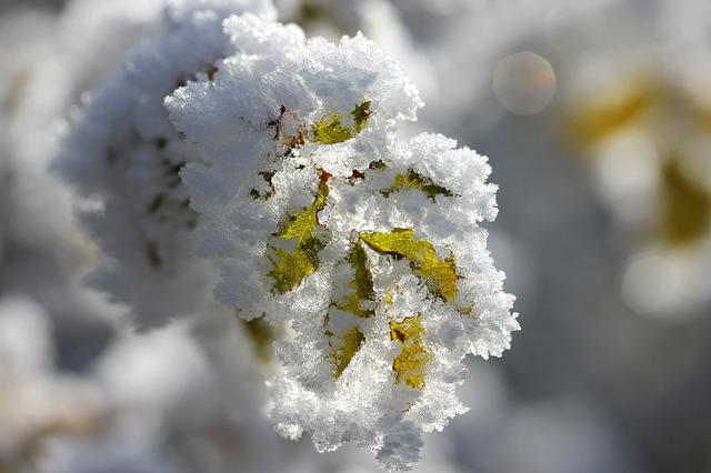 Foliage, Rime, Winter, Frozen, Macro, Nature, Frost