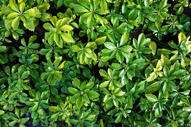 Plant, Foliage, Green, Groundcover, Decorative, Garden