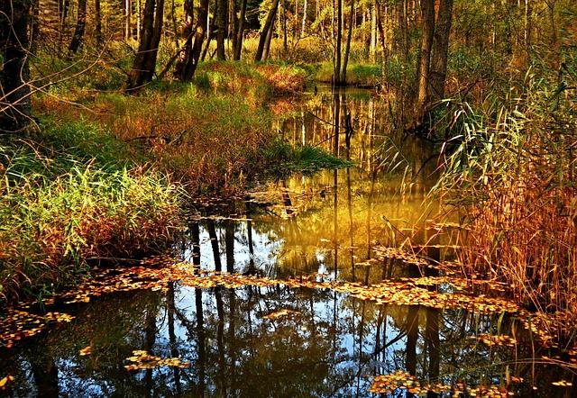 Water, Lake, Autumn, Foliage, Nature, Mite