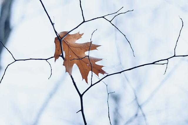 Leaf, Winter, Fall, Dead Leaf, Nature, Frost, Foliage
