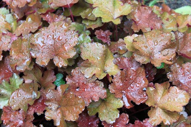 Foliage, Perennial, Rain, Spring, Summer, Wet, Green
