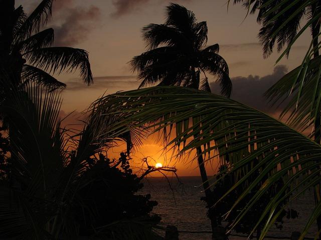 Sunset, Silhouette, Beach, Palm Trees, Foliage, Sea