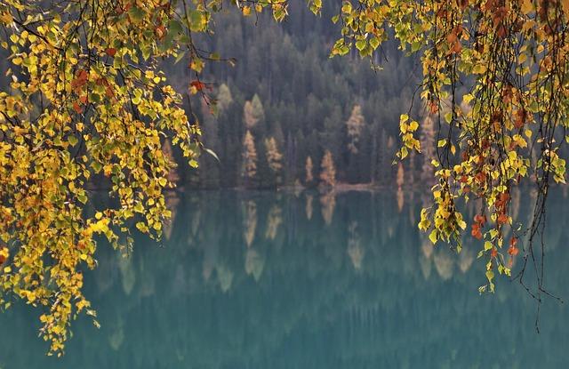 Twigs, Foliage, Autumn, Lake, Alpine, Davos, Delicate