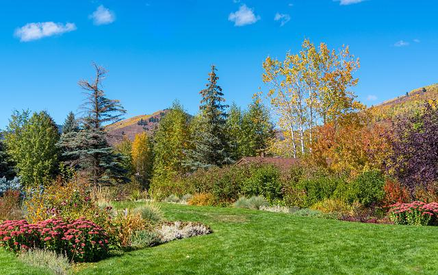 Vail, Colorado, Foliage, Betty Ford Park, Playground