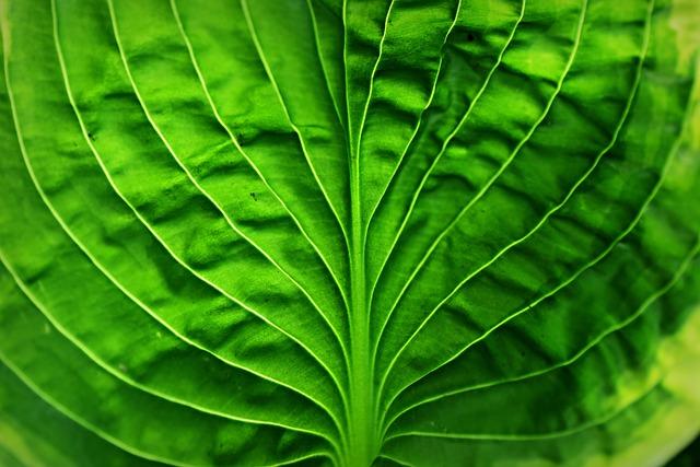 Hosta Leaf, Plant, Vein, Pattern, Foliage, Herbaceous