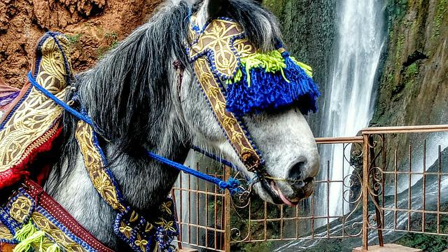 The Horse, Folklore, Exotica, The Mane, Waterfall