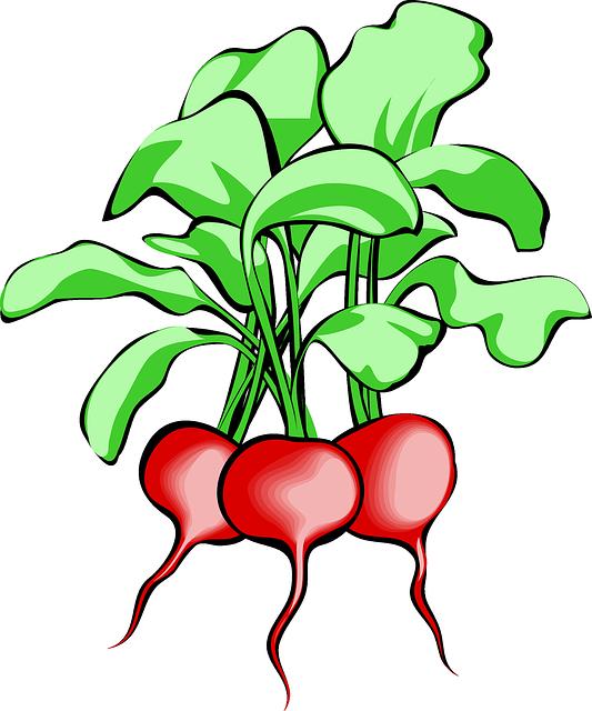 Beet, Beetroot, Vegetable, Root, Plant, Food, Raw