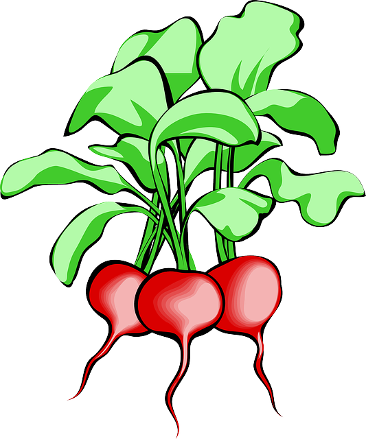 Beet, Beetroot, Vegetable, Root, Plant, Food, Raw