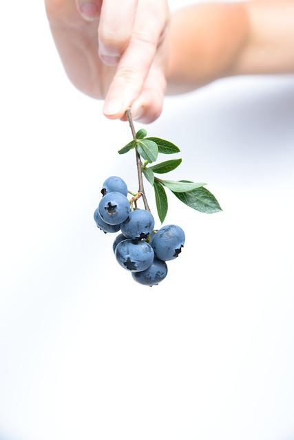 Blueberry, Fruit, Blue, Twig, Food, Berries, Delicious