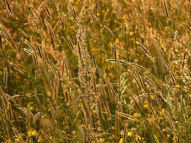 Meadow, Chuck Meadows, Food, Grasses, Blades Of Grass